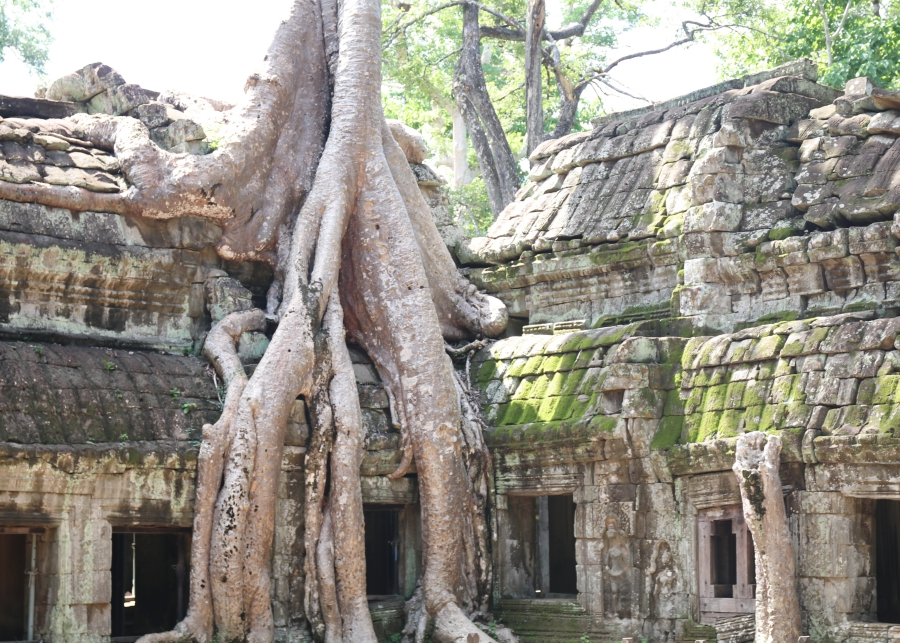 Ta Prohm – Tomb Raider Tempel